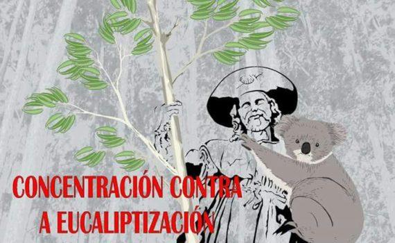 cartaz-contra-a-eucaliptizacic3b3n
